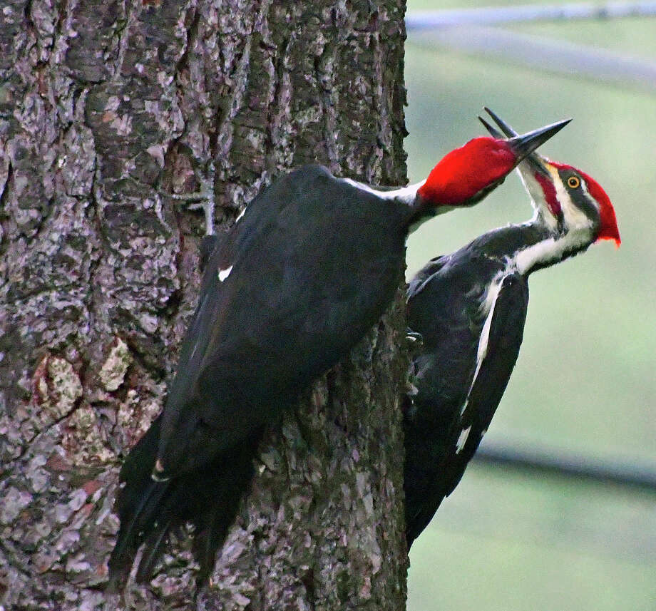 Keep clicking for recent bear and other wild animal sightings in the Capital Region.