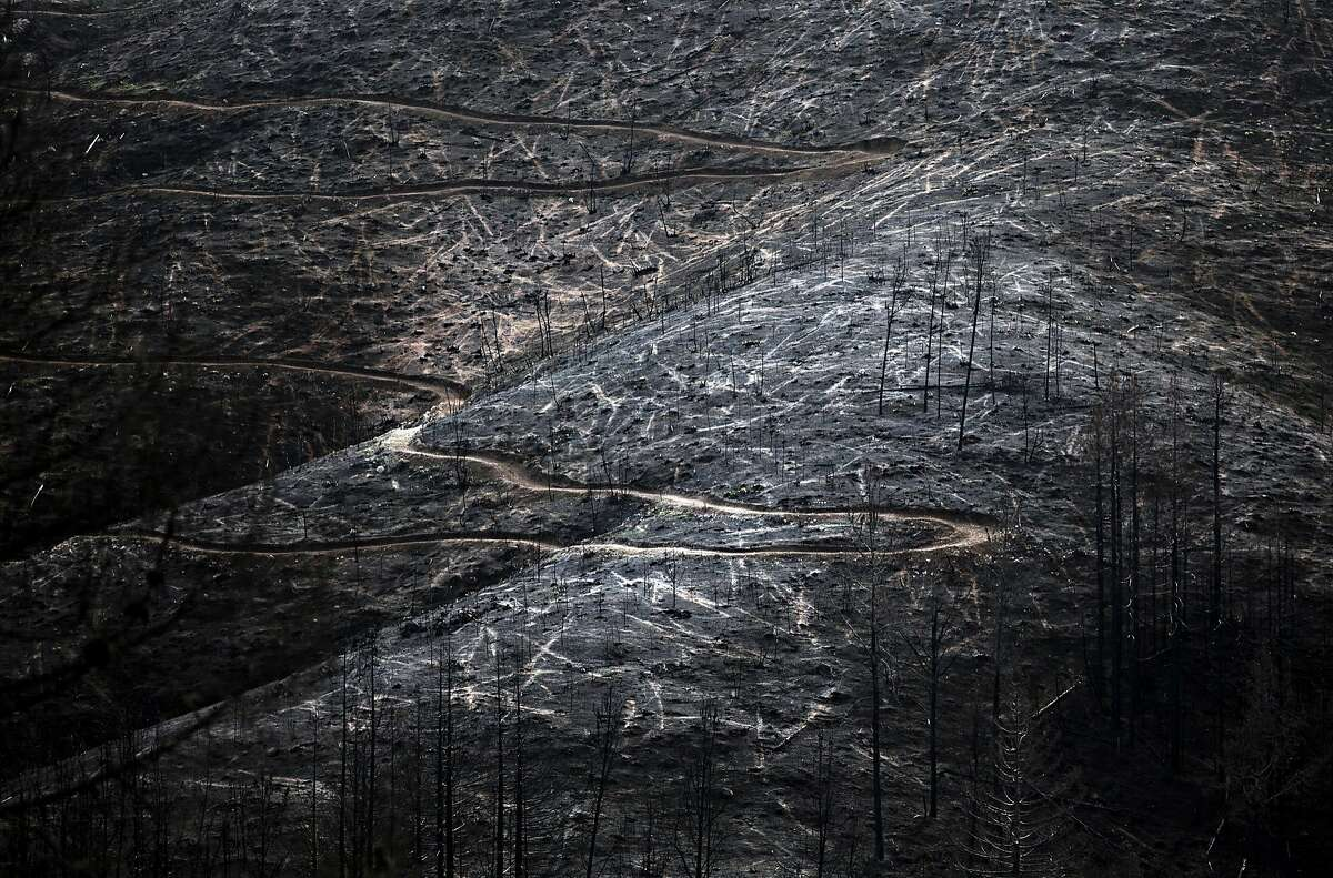 A large forest is seen completely charred after being destroyed in October 2017 by the Tubbs Fire seen Wednesday, Jan. 31, 2018 in Knights Valley, Calif.