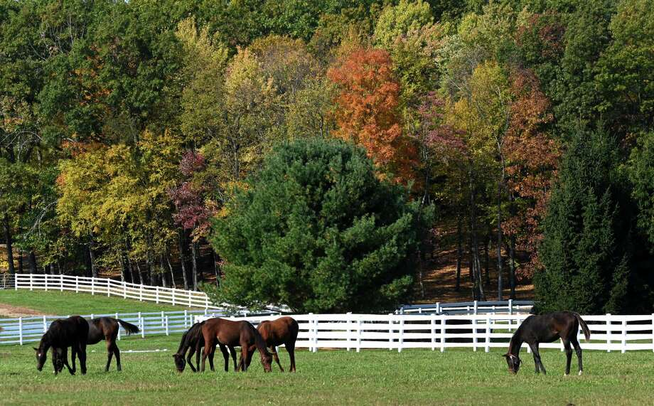 Weanlings enjoy the sun's warmth on a beautiful day and the fall colors at Song Hill Farm Tuesday Oct.23, 2018 in Stillwater, N.Y. (Skip Dickstein/Times Union) Photo: SKIP DICKSTEIN, Albany Times Union