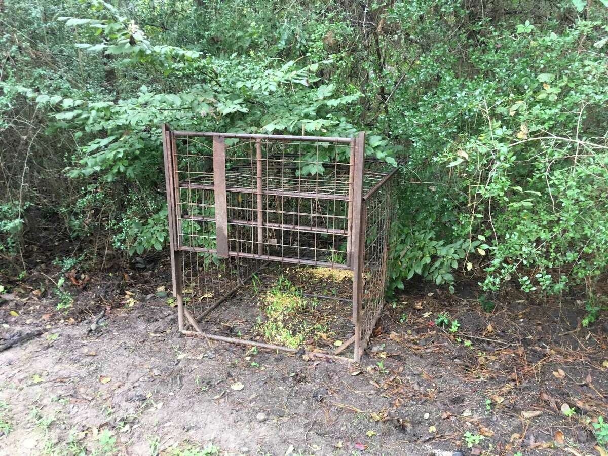 """Chris Keller says feral hogs havebeen running wild in theStonecrest Ranch subdivision east of The Woodlands. Locals describe it as a ?""""hog epidemic?"""" and have been calling on officials to solve the problem, all to little avail.Keller estimates he?'s spent at least $5,000 fixing his lawn after multiple hog invasions."""