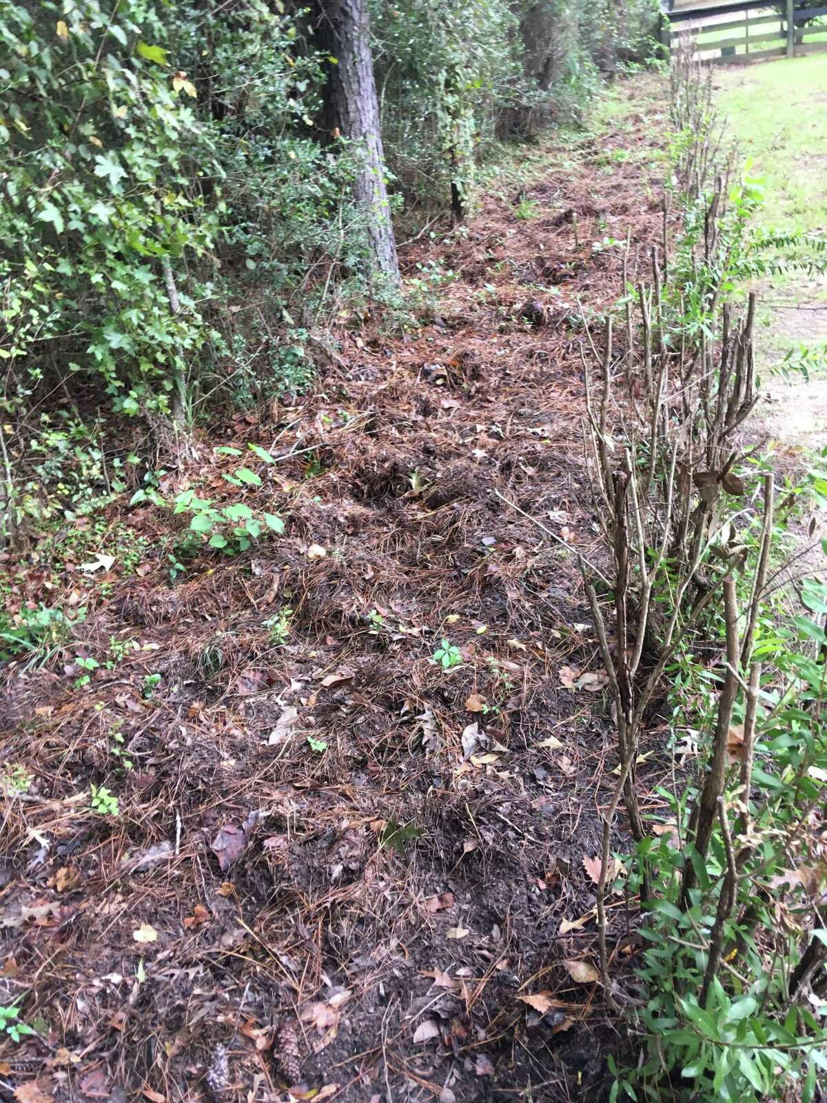 """Chris Keller saysferalhogshavebeen running wild in theStonecrest Ranch subdivision east of The Woodlands. Locals describe it as a ?""""hogepidemic?"""" and have been calling on officials to solve the problem, all to little avail.Keller estimates he?'s spent at least $5,000 fixing his lawn after multiplehoginvasions."""