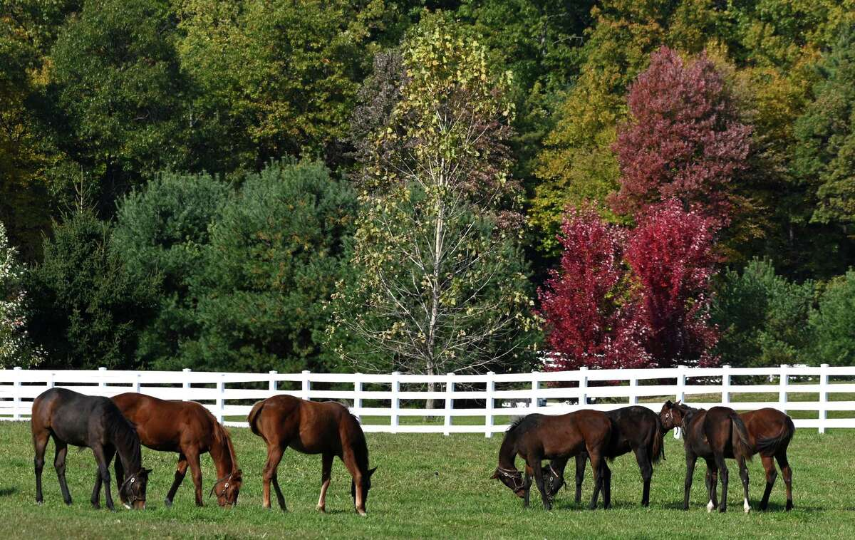 Weanlings enjoy the sun's warmth on a beautiful day and the fall colors at Song Hill Farm Tuesday Oct.23, 2018 in Stillwater, N.Y. (Skip Dickstein/Times Union)