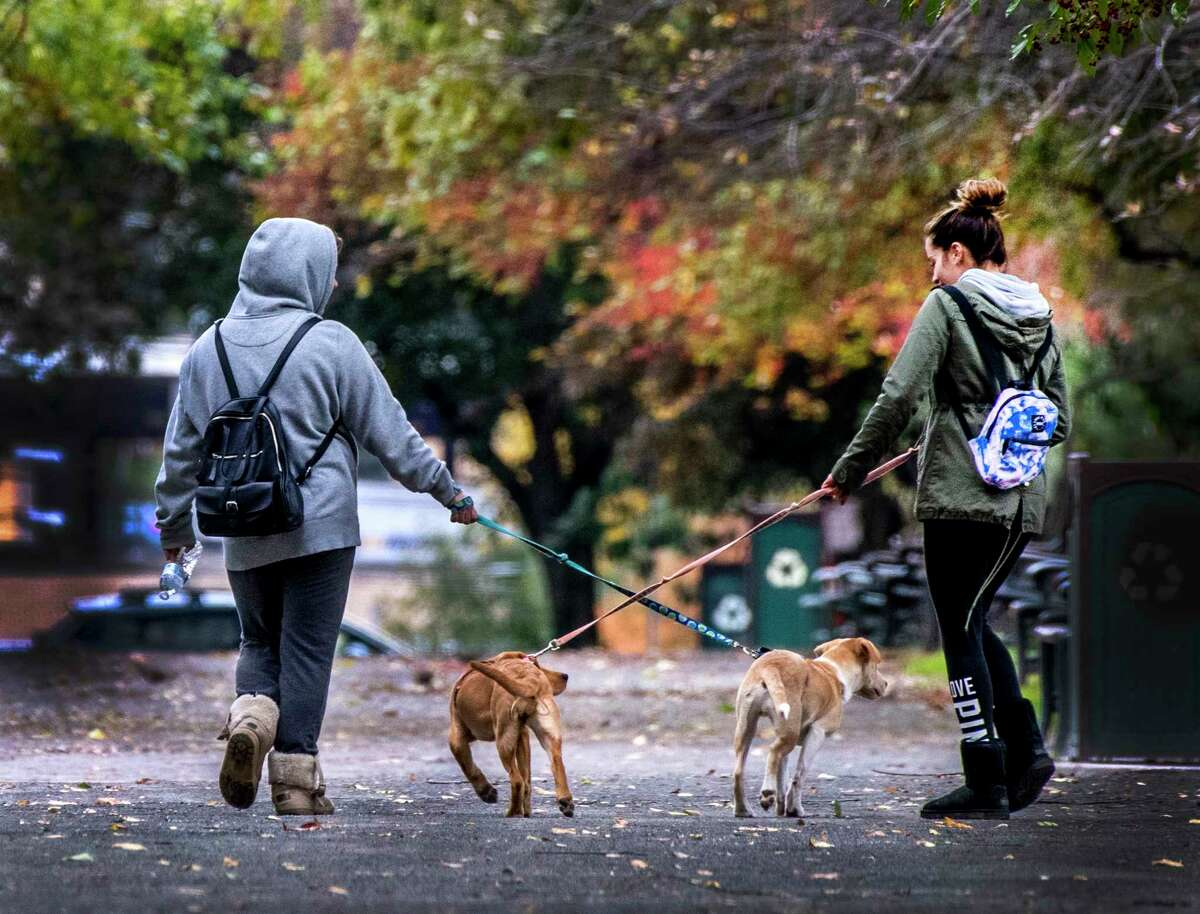 See Pugonya, 23, left, goes for a walk with her pup Zeuce, 4 months old and her friend Marissa Mort, 22 walks her dog Harley also 4 month old in Washington Park Wednesday. Oct.23, 2018 in Albany, N.Y. The pups are playmates and the adults are best friends who both graduated from the University at Albany this fall. (Skip Dickstein/Times Union)