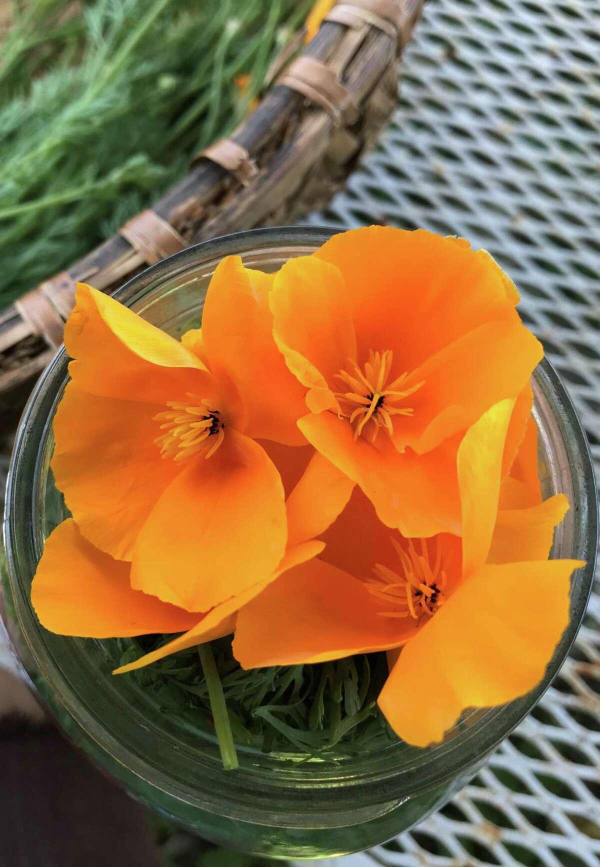 California poppy, which Underground Alchemist's Rebecca Hein said is used to make a tincture