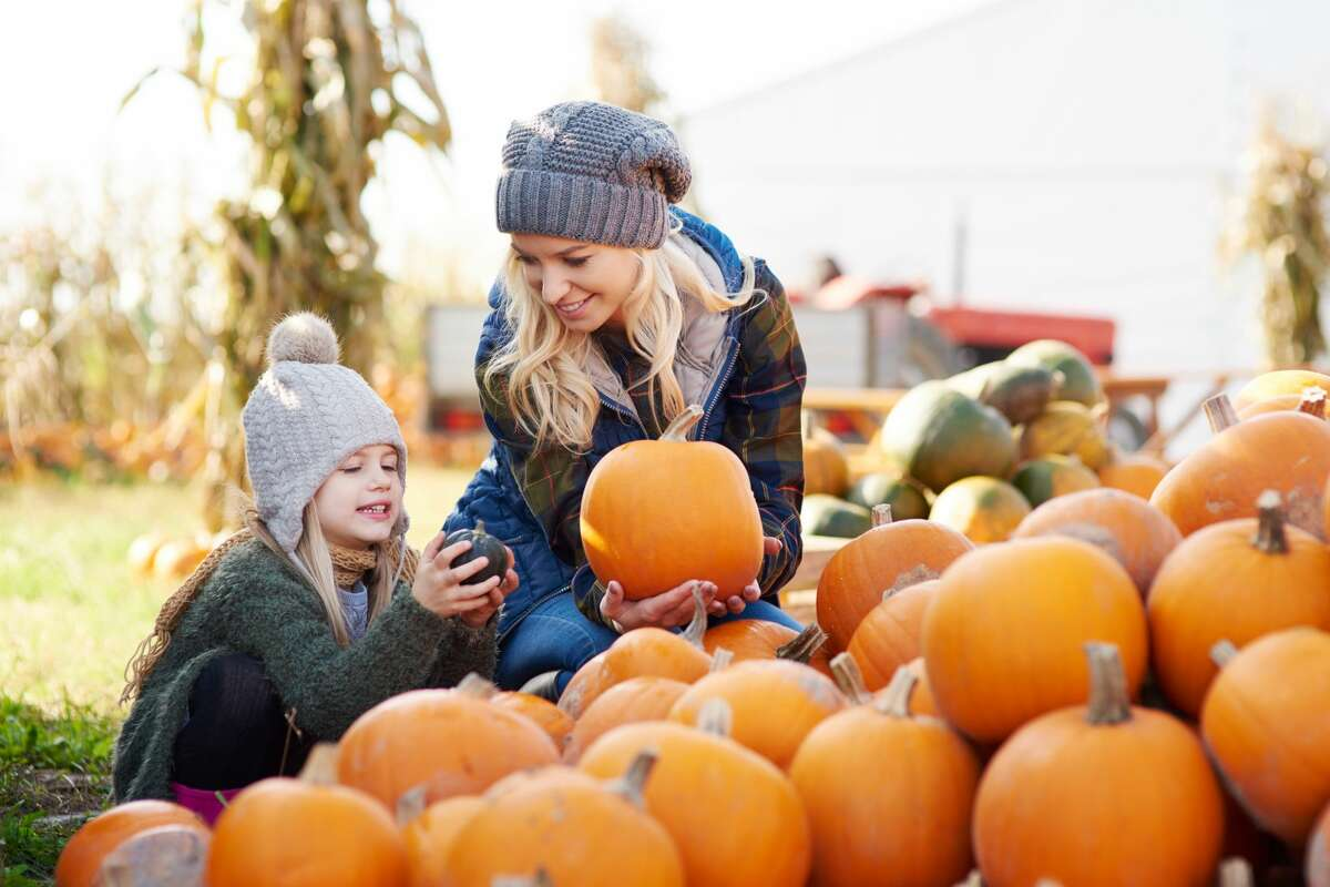 Pumpkin patch visits are considered a moderate risk activity during the coronavirus pandemic.