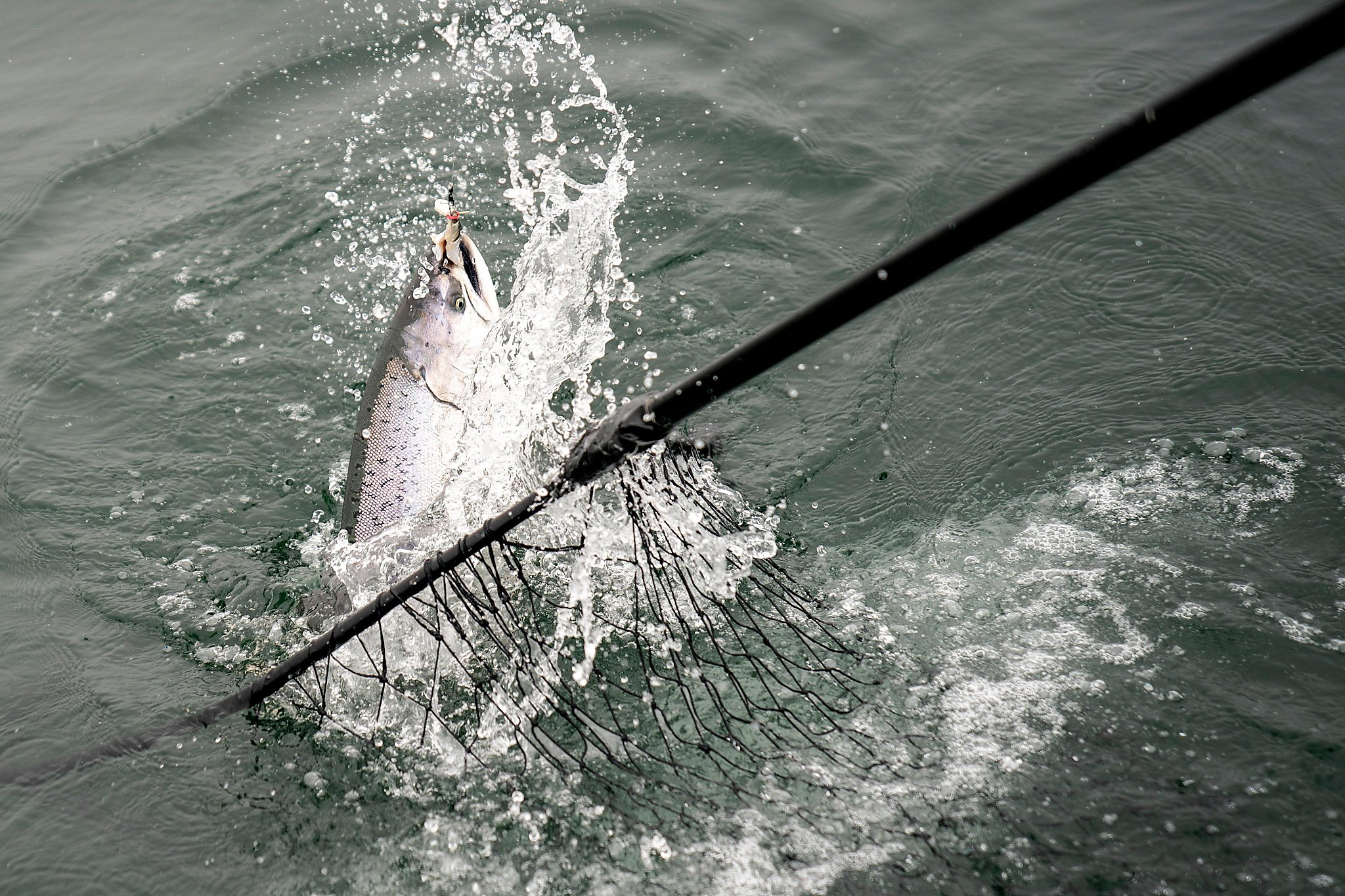 Salmon season has arrived  Here's what to expect
