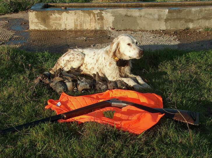While the dogs might be ready to go and a hunter's shooting skills are honed to fine-turned perfection, the recommendation from both biologists and guides is for hunters to hold off a month or so before engaging in quail season that starts Saturday.