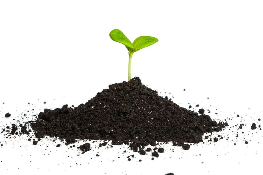 "The University of Houston Bauer College Small Business Development Center will host a course titled ""Four Ways to Grow Your Business"" on Thursday. Photo: Fotolia, Heap Dirt With A Green Plant Spr / Sergii Figurnyi - Fotolia / Sergii Figurnyi - Fotolia"
