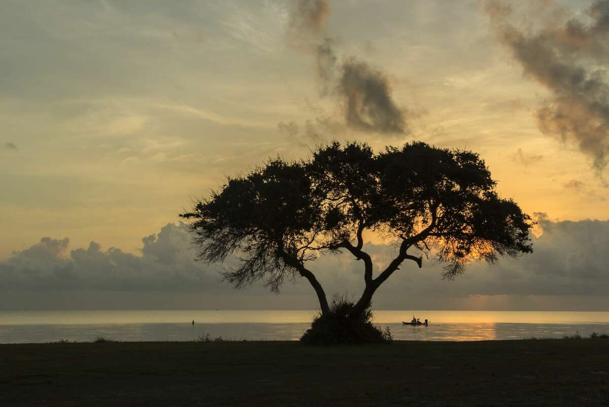 Tree at sunset with fishing boat on Matagorda Bay at Powderhorn Ranch.