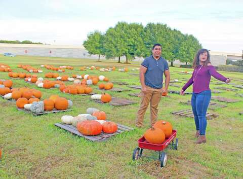 Holy cross church, sugar land, texas, usa pumpkin patch.