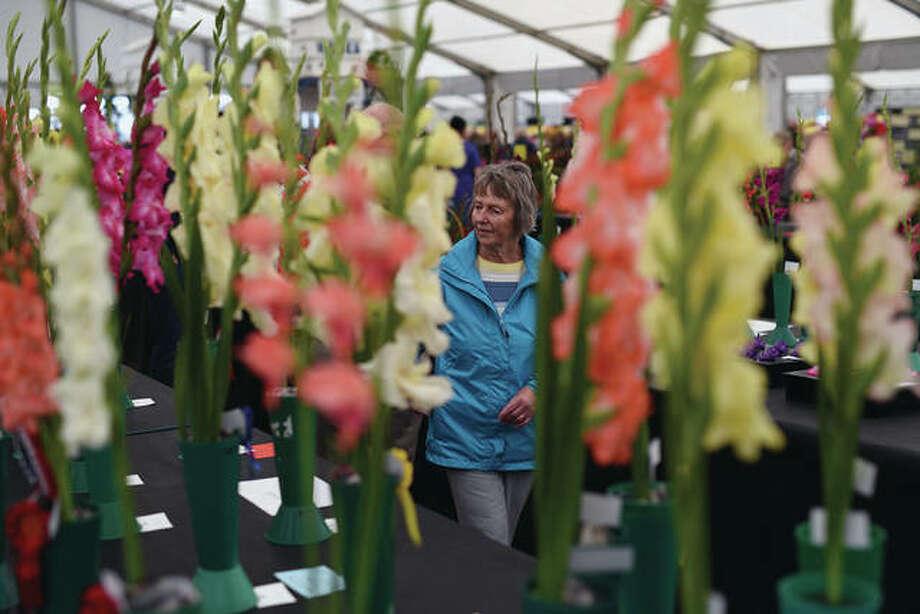 A woman views gladioli flowers on display. Photo: Oli Scarff | AFP (Getty Images)