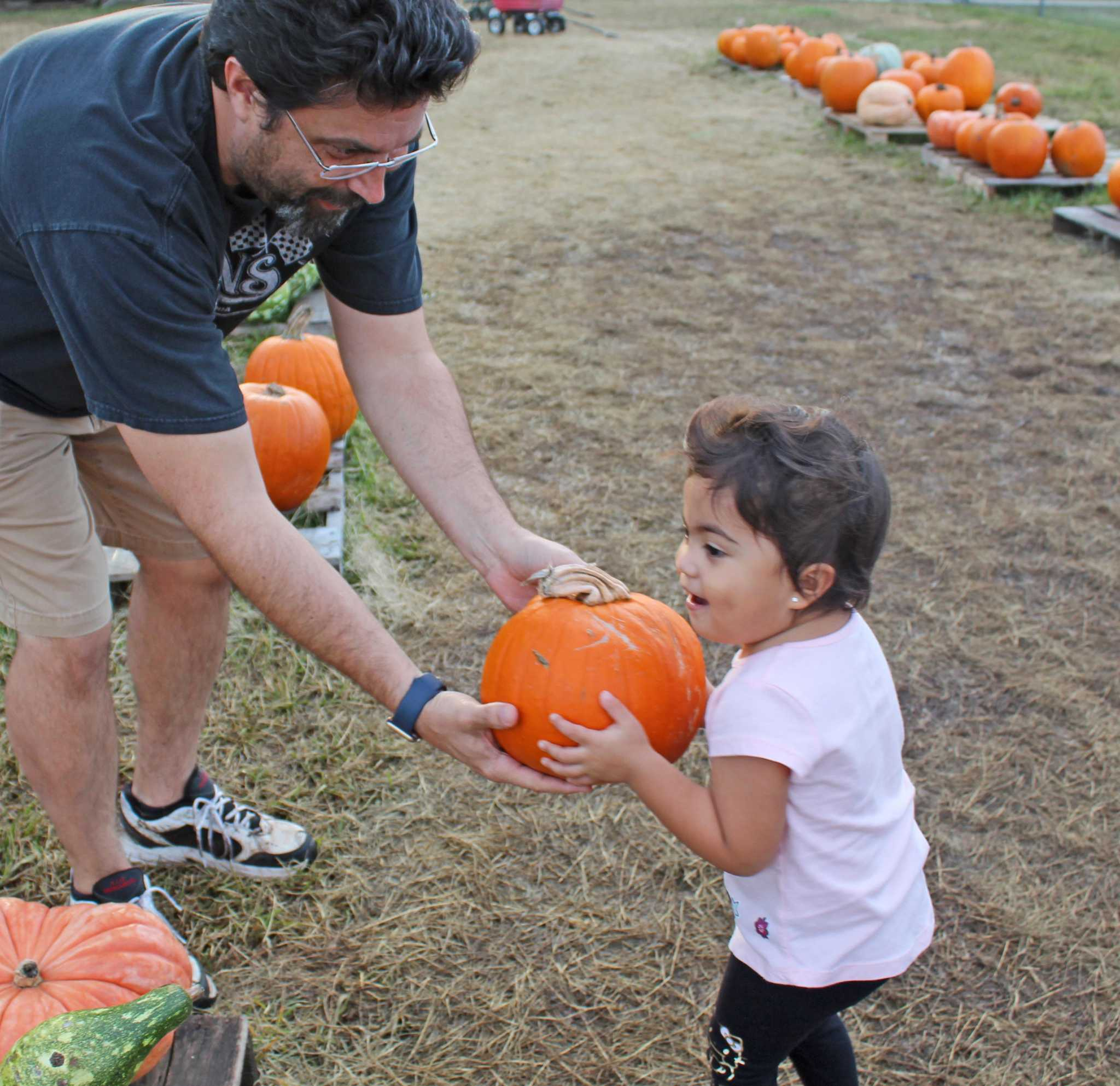 Where to find pumpkin patches around houston | mommypoppins.