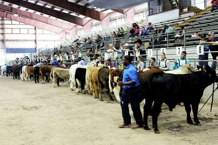 Participants wait for their calves to be judged at the Humble Civic Center Arena.