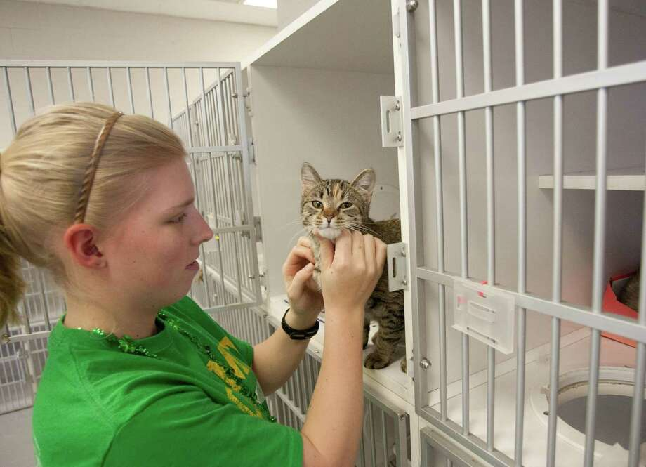 A volunteer pets a cat at the City of Conroe Animal Shelter's cat room. The Conroe City Council has approved a contract with the city of Willis for the intake of 240 animals a year. Photo: Staff Photo By Eric S. Swist / Staff photo by Eric S. Swist