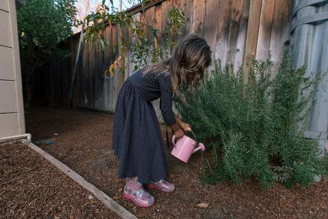 b1969102c9bf1  p One of Stecher s daughters waters a plant in the backyard of their Menlo