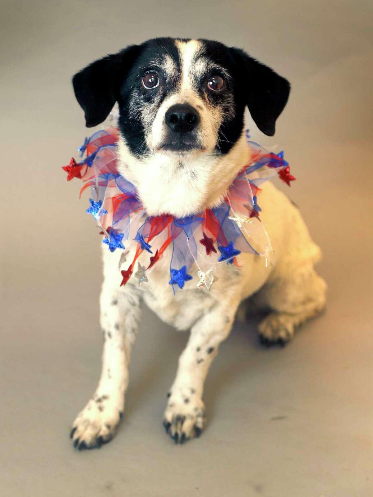 November is 'Adopt a Senior Dog