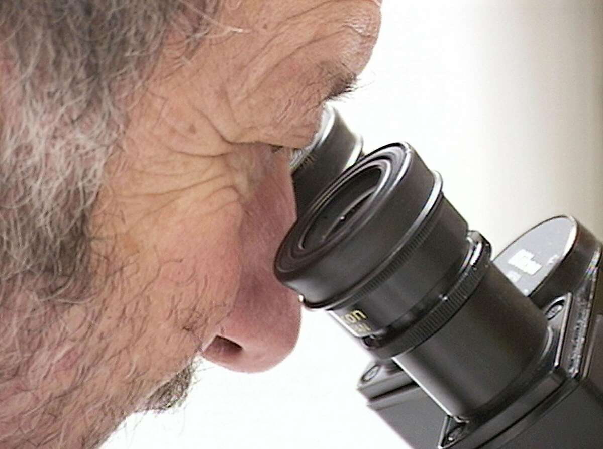 FILE - This undated image from video shows Dr. Irving Weissman looking into a microscope at the Stanford University Cancer and Stem Cell Biology Institute in Stanford, California.