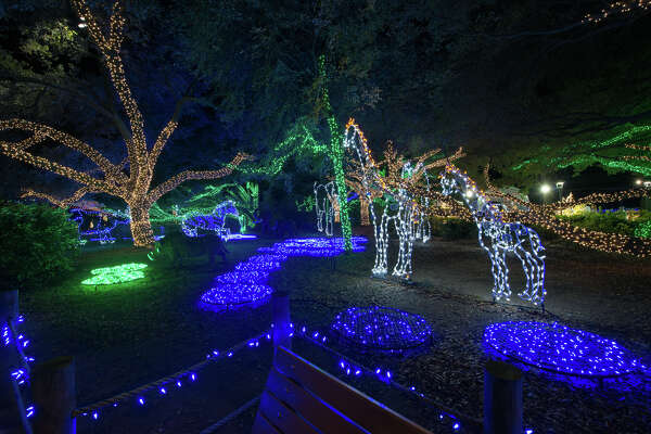 Houston Zoo Lights To Be Flipped On Nov 17 Houstonchronicle Com