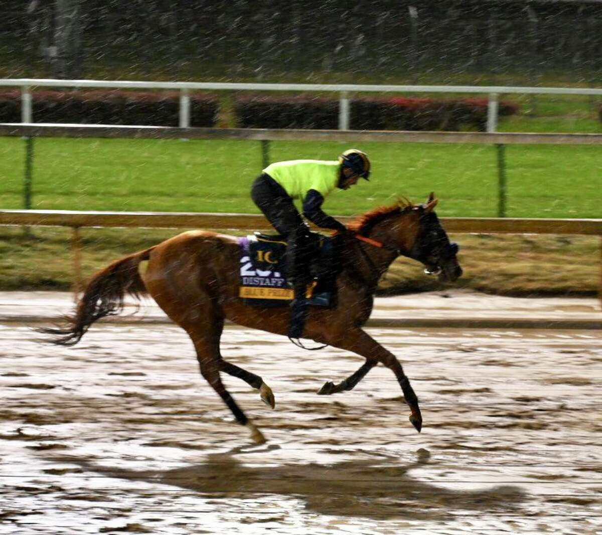 Rain showers at Churchill Downs didn't stop the Breeders Cup entrants from their morning exercise.
