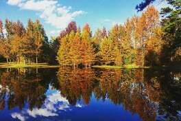 """Lake Bob Sandlin State Park, Pittsburg @lakebobsandlinstatepark: """"Fall colors are out at the trout pond. The rest of the park will follow about next week."""""""