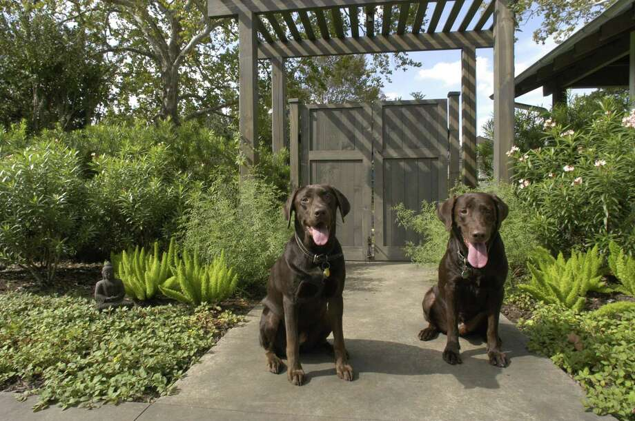Children and pets influence the types of homes buyers are looking for. >>Thinking of buying? Here's what a 'starter' home in Texas looks like Photo: E. Joseph Deering, Staff / Houston Chronicle / Houston Chronicle