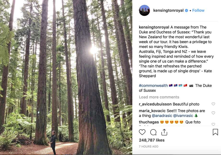 Prince Harry and his wife, Meghan, visited a stand of redwoods in Rotorua on New Zealand's north island. They shared an image of Meghan among the trees on Instagram. Photo: Instagram: @KensingtonRoyal