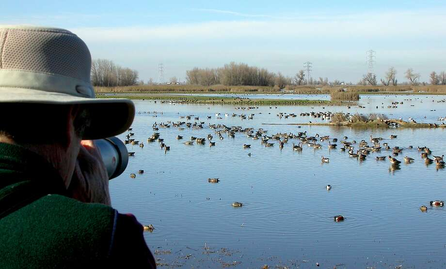 At the viewing deck at Colusa National Wildlife Refuge in Sacramento Valley, photographer Andy Lacasse trains his lens in on ducks and geese. Photo: Tom Stienstra, Tom Stienstra / The Chronicle