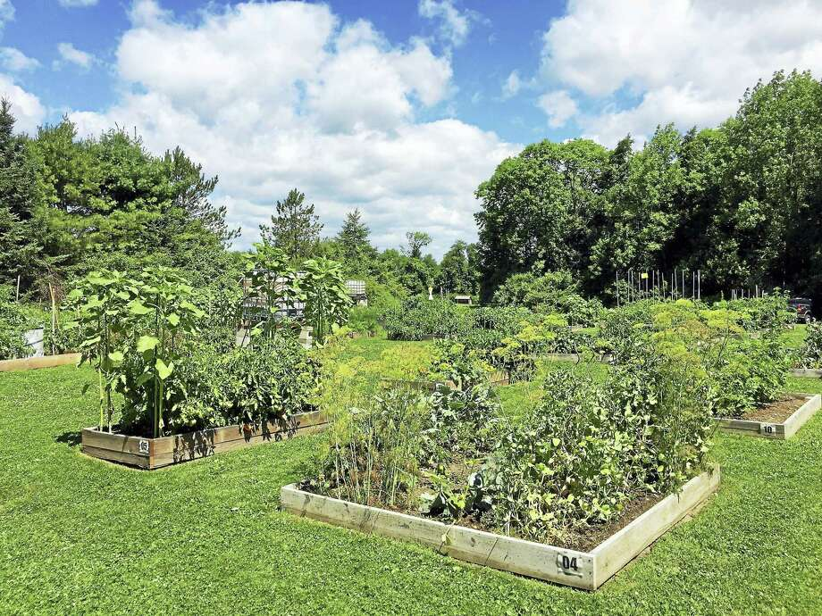 The Bowman Community Gardens in Torrington. Photo: File Phoot