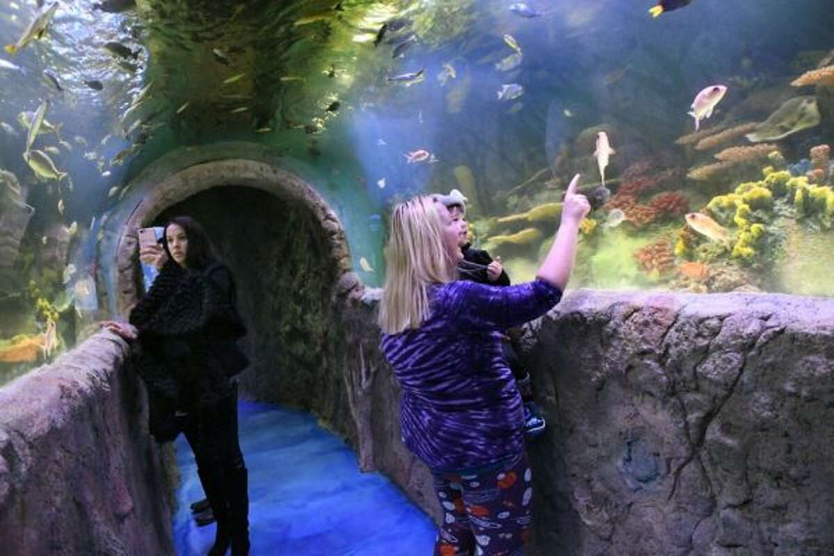 Shana Clark of Colonie, right, points out fish to her son A.J. Clark, 2, as they stroll through the Caribbean tunnel on Tuesday, Dec. 20, 2016, at Via Aquarium in Rotterdam, N.Y. (Cindy Schultz / Times Union)