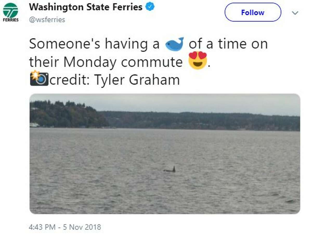 Washington State Ferries tweeted a photo of an orca near a ferry. The ferries between Fauntleroy, Vashon Island and Southworth were affected Monday afternoon.