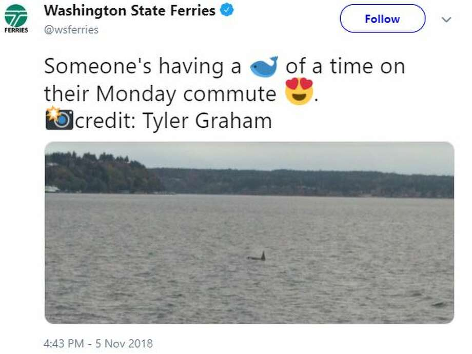 Washington State Ferries tweeted a photo of an orca near a ferry. The ferries between Fauntleroy, Vashon Island and Southworth were affected Monday afternoon. Photo: Courtesy Twitter