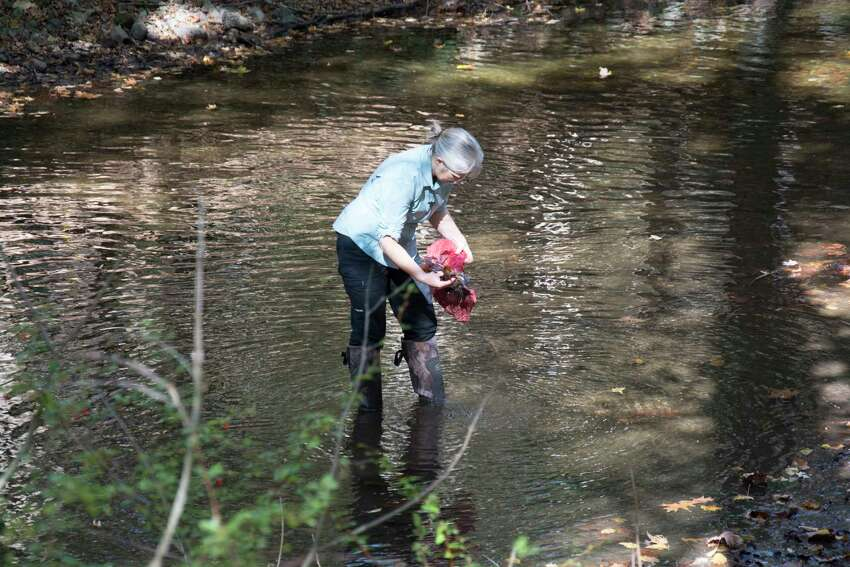 Emma Rosi takes samples from a stream during the Australian study.