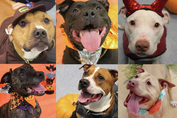 Nearly 80 cats, dogs and rabbits are looking for homes this November. Click through the slideshow to meet them all. For up-to-date adoption information from the Mohawk Hudson Humane Society in Menands, visit mohawkhumane.org/adopt.