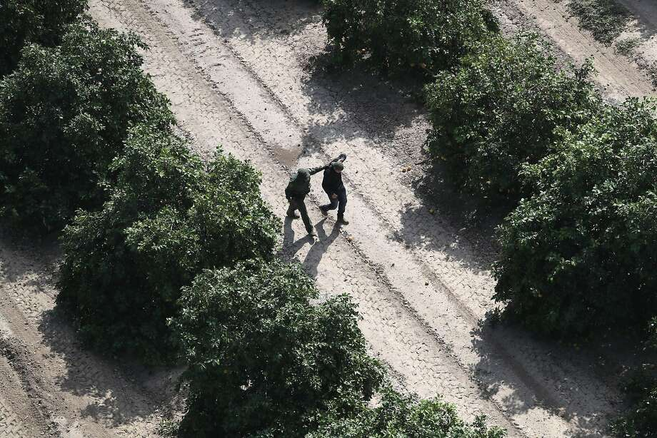 A U.S. Border Patrol agent detains an undocumented immigrant in an orange grove on November 6, 2018 in McAllen, Texas. Border Patrol agents on the ground, assisted by a helicopter unit of U.S. Air and Marine Operations agents, detained a group of immigrants who had crossed the border illegally from Mexico. Photo: John Moore
