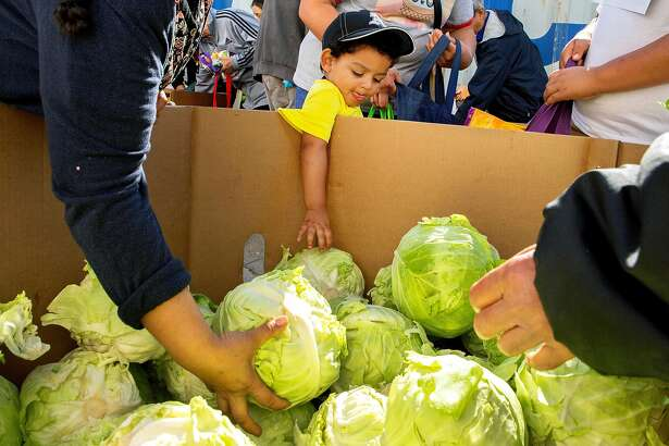 Angel Henriquez, age 2, stretches his arm to pick out a cabbage at the Fresh Food for Families program at the HUB HUSD Parent Resource Center on Thursday, Oct. 25, 2018, in Hayward, Calif.