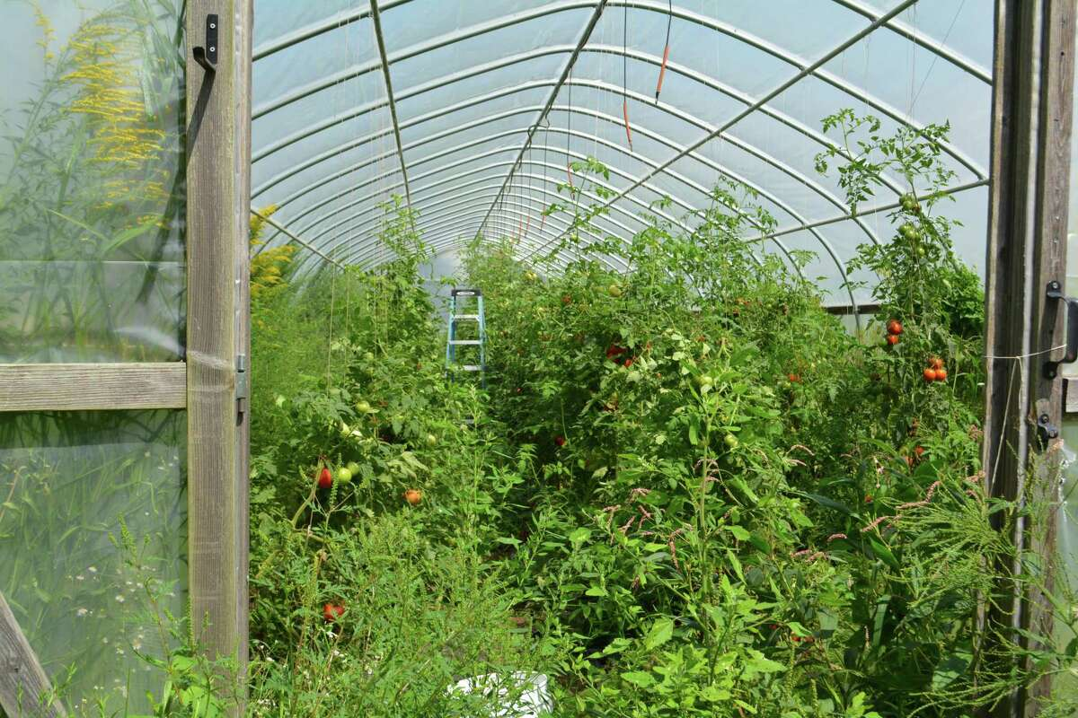 Maple View Farm in Harwinton represents the type of family business which would be supported by a proposed resiliency program through the Northwest Hills Council of Governments.