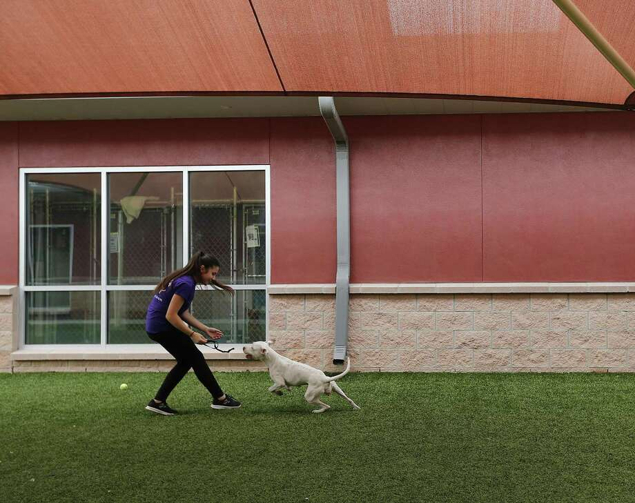 Volunteer Emel Hyusein plays with a dog at Animal Care Services in April 2017. The ACS Pet Pantry program is in need of dog food, litter and newspapers to continue serving pet owners who need help in taking care of their animals. Photo: Kin Man Hui /San Antonio Express-News / ©2017 San Antonio Express-News