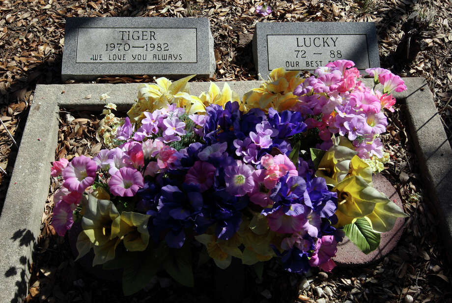 A decorated grave stands out at Pet Memorial Cemetery Photo: GLORIA FERNIZ, SAN ANTONIO EXPRESS NEWS / SAN ANTONIO EXPRESS-NEWS