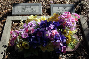 METRO A decorated grave stands out at Pet Memorial Cemetery Friday, February 22, 2008. GLORIA FERNIZ/STAFF