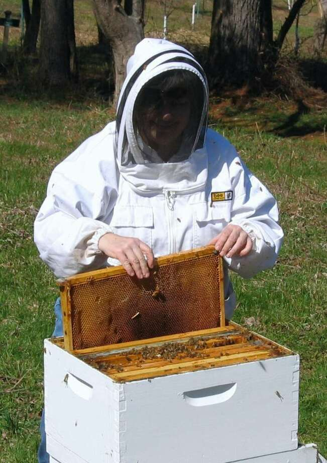 Members of the Backyard Beekeepers Association will be on hand to harvest honey Saturday at the Audubon Greenwich. Photo: Contributed Photo / Connecticut Post Contributed