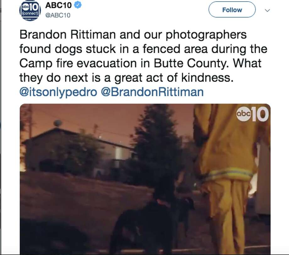 A reporter and a photographer from ABC10 rescued a group of dogs from the approaching Camp Fire. Photo: ABC10/Twitter