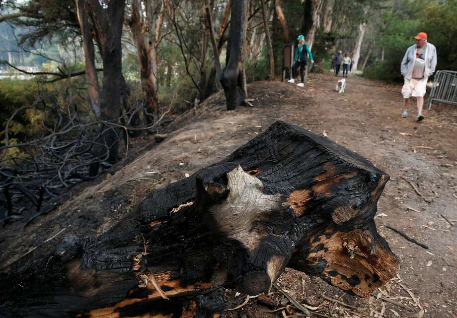 Mike Rabbitt and Margaret Mulligan walk past blackened branches and trees from a suspicious fire between the Polo Field and fly casting pools at Golden Gate Park. Photo: Paul Chinn / The Chronicle