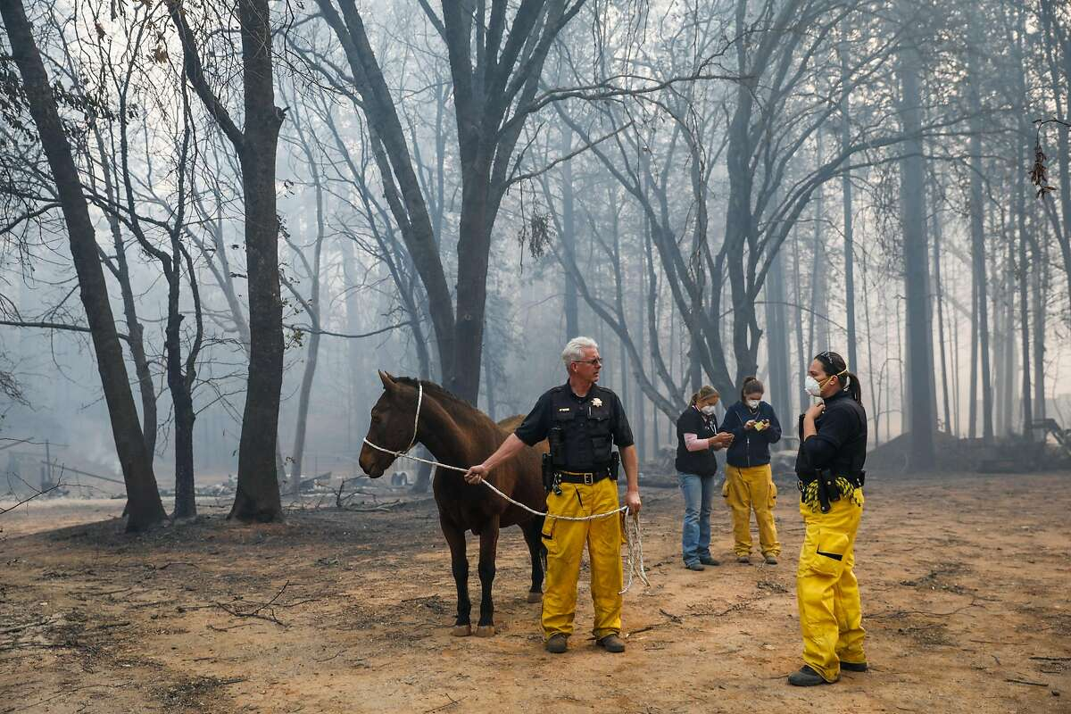 Yolo County Sheriffs Office Animal officer Tim Share (left) and officer Stephanie Amato (right) rescue an injured horse following the Camp Fire in Paradise, California, on Saturday, Nov. 10, 2018.