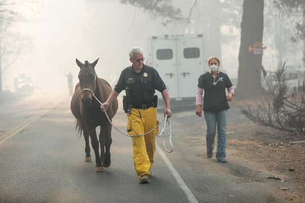 Yolo County Sheriff's Office Animal officer Tim Share rescues an injured horse following the Camp Fire in Paradise, California, on Saturday, Nov. 10, 2018.