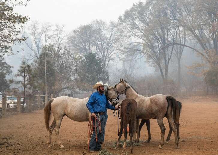 Bennett Josiassen stands with a huddle of horses left behind after the Camp Fire ripped through Paradise, Calif. as a group of volunteers rescues them from Maple Leaf Lane in Paradise, Calif. Saturday, Nov. 10, 2018.