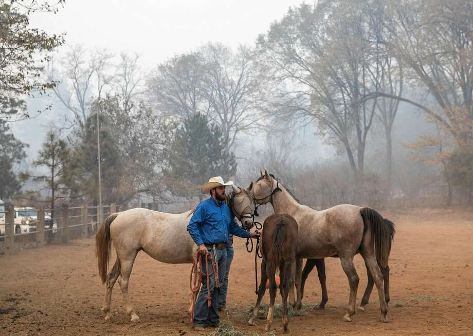 Bennett Josiassen stands with a huddle of horses left behind after the Camp Fire ripped through Paradise, Calif. as a group of volunteers rescues them from Maple Leaf Lane in Paradise, Calif. Saturday, Nov. 10, 2018. Photo: Jessica Christian / The Chronicle