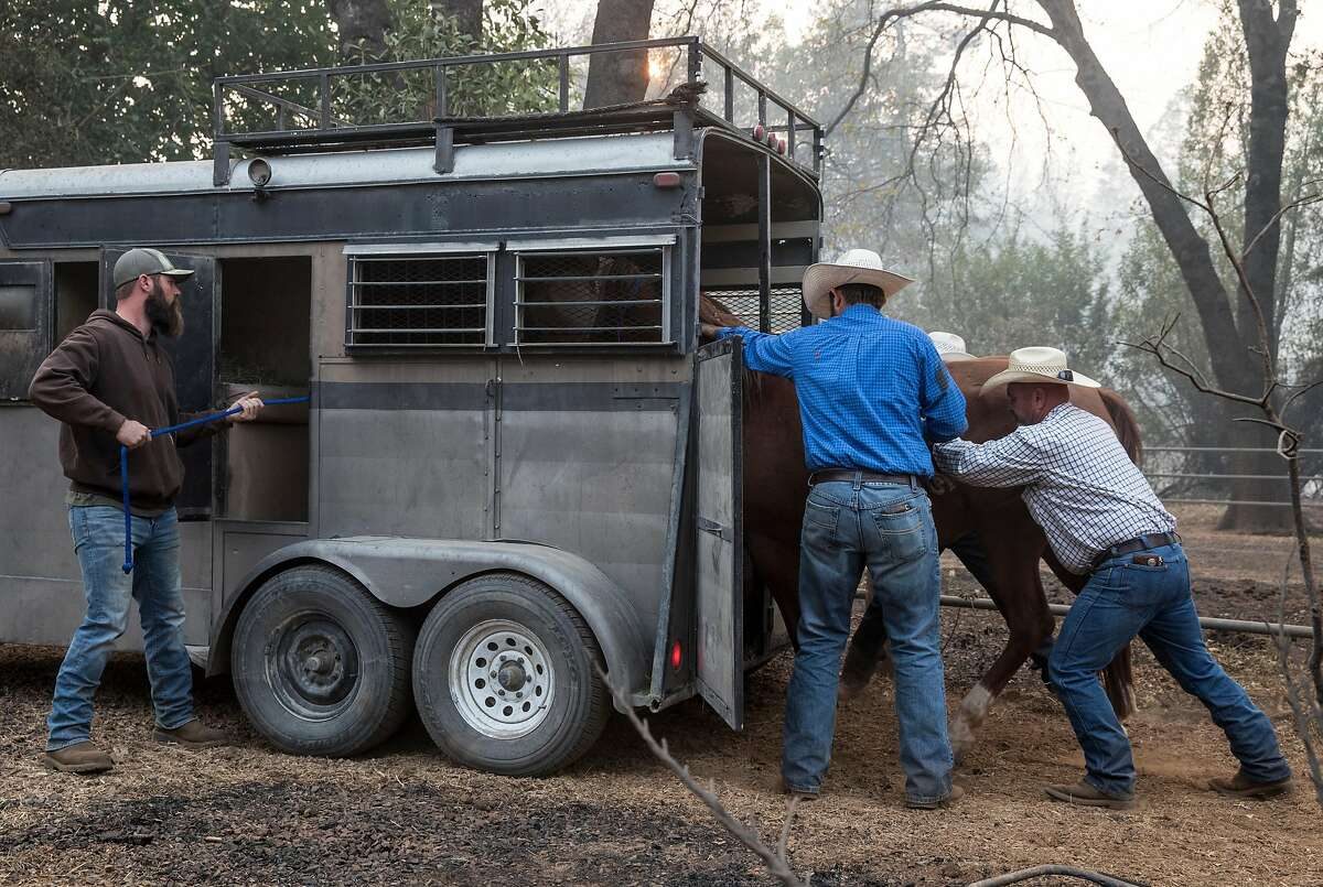 (From left) Zach Josiassen, Bennett Josiassen and Jerry Kirk work to rescue eight horses left behind after the Camp Fire ripped through Paradise, Calif. near Maple Leaf Lane Saturday, Nov. 10, 2018.