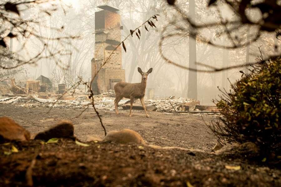 Camp Fire devastates Paradise near Chico — businesses