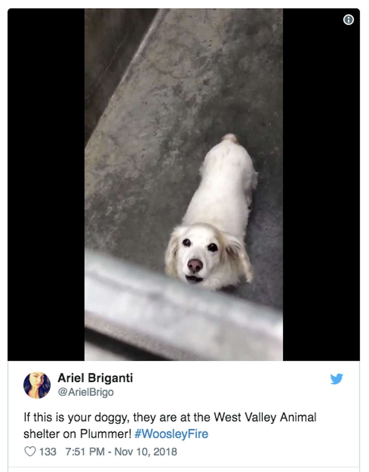 People are posting photos of animals lost in the Camp Fire in hopes of tracking down the owners. Many lost animals are at the Chico Municipal Airport where a temporary animal shelter has been created.