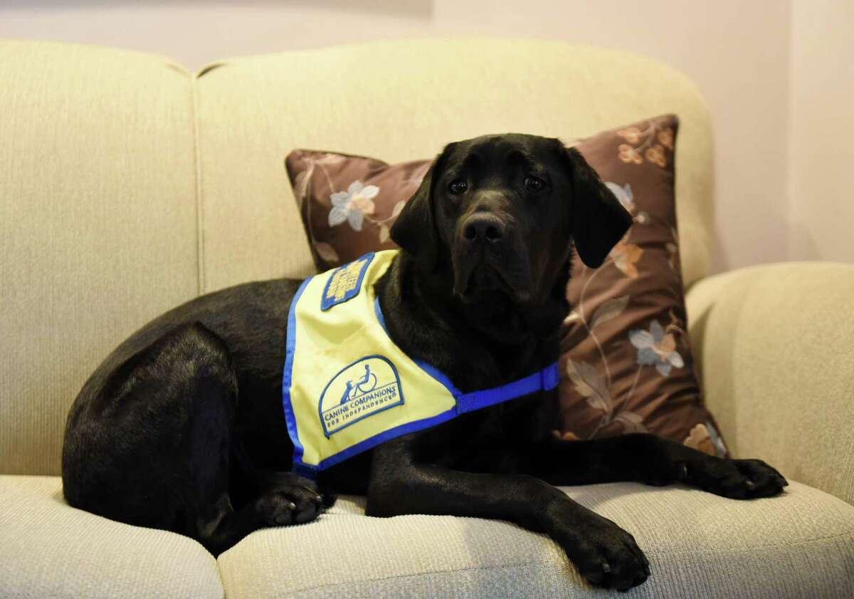 Jenny, a service dog puppy Laura Assaf is raising for Canine Companions for Independence on Monday, Oct. 29, 2018, in Rotterdam N.Y. CCI provides assistance dogs free of charge to adults, children and veterans with disabilities. (Will Waldron/Times Union)